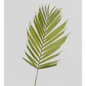 TR 632 Пальмовый лист
