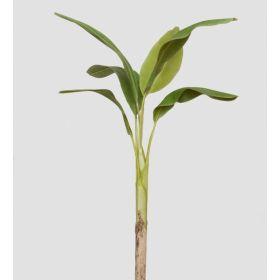 TR 617L Банановое дерево
