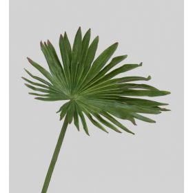 TR 610 Пальмовый лист