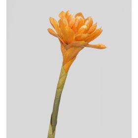 TR 559B Бутон цветка имбиря