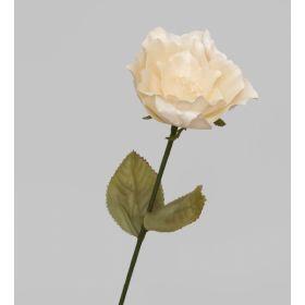 TR 410 Роза