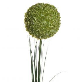 Алиум зеленый