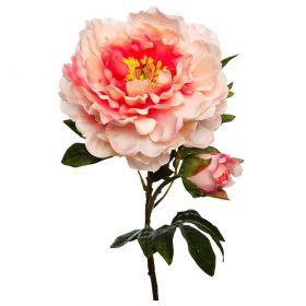Пион нежно-розовый
