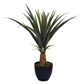 Куст ананаса